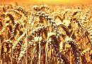 Ekonomi Bakanlığı 2020 yılında Ukrayna'da 68 milyon ton tahıl üretimi öngörüyor