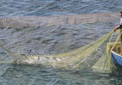 Karadeniz'de Ukrayna'nın endüstriyel balık avcılığı geçen yıla göre % 63 arttı.