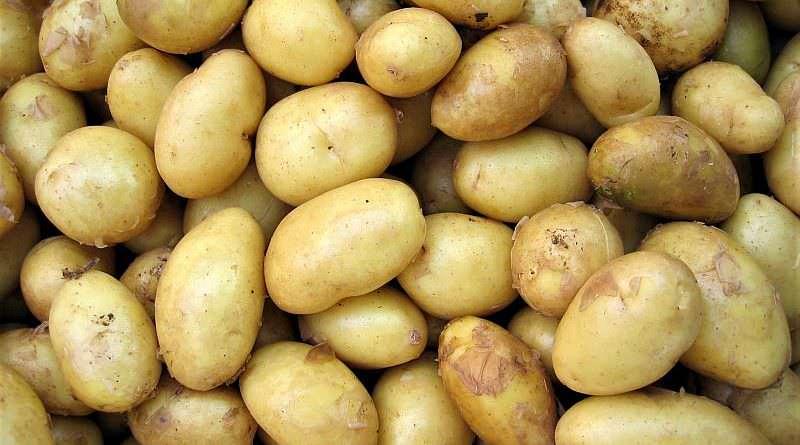 Ukrayna'nın patates ithalatı artıyor. İlk 10 ayda 260 bin tona ulaştı
